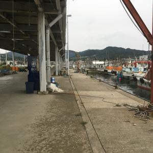 2020年9月20日深日漁港の様子