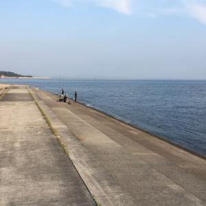 2021年8月1日深日漁港の様子