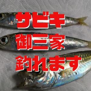 深日港のサビキ釣り釣果はいかがですか?