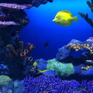 チャタヌーガで水族館に行ってきた。 空いているのでのんびりと鑑賞ができます。親子連れには最高のスポットですね