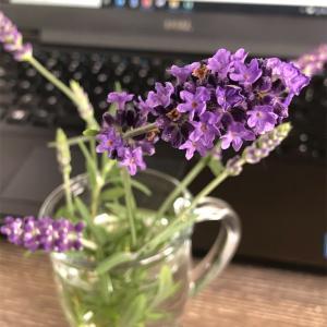 在宅勤務でイライラしていたら、ラベンダーを机に飾ってくれました…