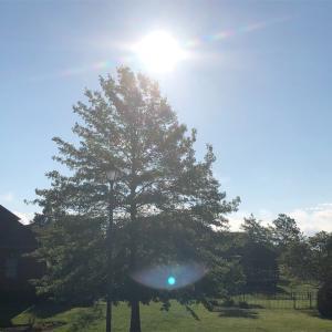 素晴らしい朝が来た♪ 希望の朝だ♪ 待ちに待った太陽が顔を出してくれました。