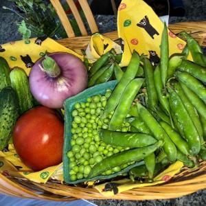 アーミッシュの新鮮野菜と家庭菜園で植えたバジルと西洋パセリをパスタに乗せて… 新鮮野菜は美味しくて幸せです。