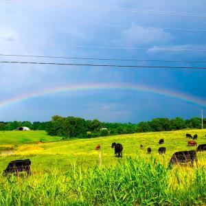 最近、大きな虹をよく見ます。過剰虹も見えましたが写真に写らず。色々面白い事もわかりました。