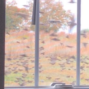 ヒッチコックの鳥のような凄い動画を見ました… 裏庭の話です…