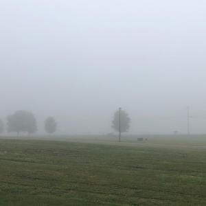 とても深い霧で一日がスタート。 濃い霧の中の今の日本。早くすっきりと晴れ渡る事を願います。