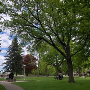 カナダとアメリカの国境の街 スーセントマリー(Sault Ste. Marie)。スペリオル湖とヒューロン湖を結ぶ運河(Soo Locks)は必見です。