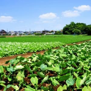 誰でも簡単に農業体験【農具、畑、宿泊施設も借りれる便利サービス】