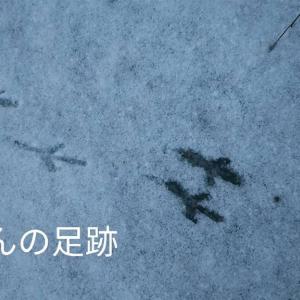 大学を休学して日本を歩いた話 2