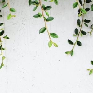 こぼれ種から発芽して花が咲いた!実は成るのか?