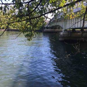 大阪の大川で水中を映してみたよ