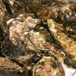 殻付き生牡蠣の食べ方と調理法〜プロが教える自宅で簡単にできる方法〜