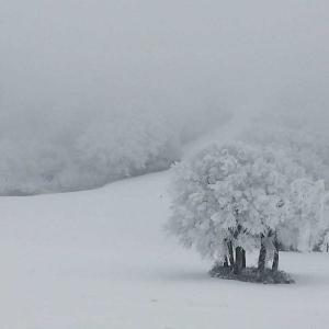今年も冬がやってきた