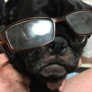 老眼鏡が手放せない! 老眼用コンタクトレンズを思案中