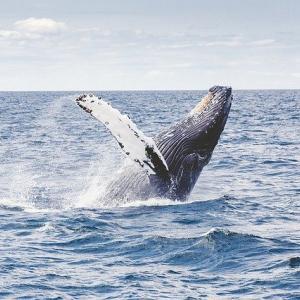 GPIF(年金積立金管理運用独立法人)が『クジラ』と呼ばれる理由【2020年度の実績を紹介】