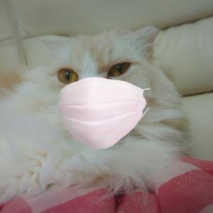 お猫様と志村けんと…