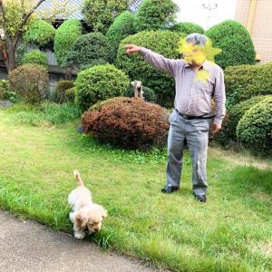 犬用ボーロを自作試みる休日。