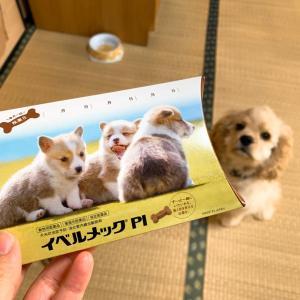 諸行無常~儚き畢生のペットヒーターカバー~