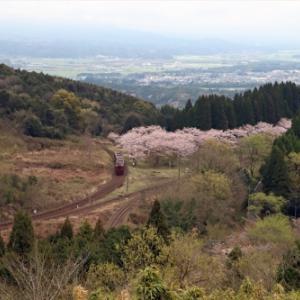 【音無支部】肥薩線 桜の咲き誇る大畑駅で(2020.3.28~29)