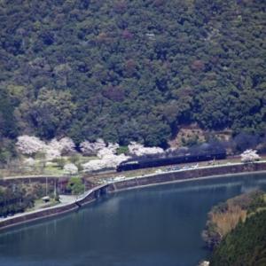 【音無支部】球磨川沿いの桜並木を行くSL人吉号(2020.3.29)