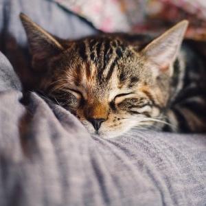 【に】睡眠と闘わない