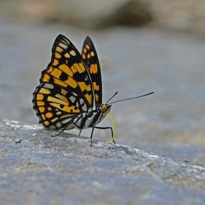 【詩】2010年7月8日の蝶は