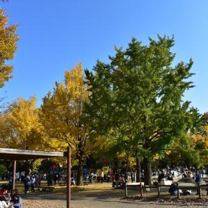 昭和記念公園その4(2020.11.15)