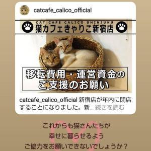猫カフェのクラウドファンディング