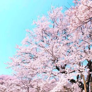 桜といえば思い出すのは…