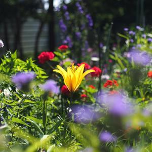 花壇を彩る花