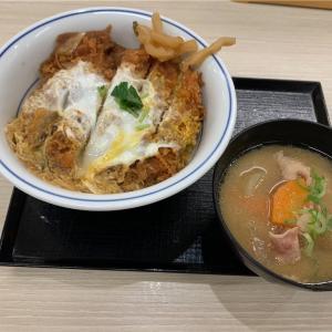 禁酒2日目 メダカ