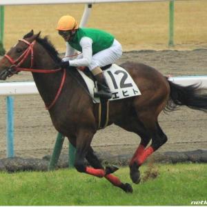 今週の注目レース【白百合S】京都にいる❗️蛯名騎手に期待