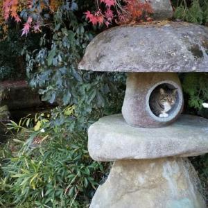 今日も両親に振り回される私達❕速谷神社❗