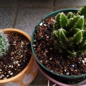 また植物を増やしてしまった❗ガーデニング楽しい🤗