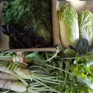 野菜の収穫のために三次に行きました❗