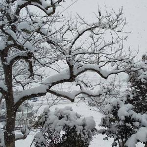 昨日から雪❄️父発熱で右往左往❕