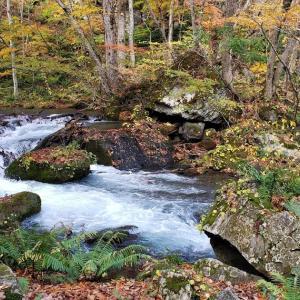 青森県の奥入瀬渓流と蔦沼