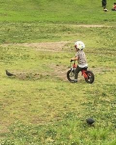 未就学児に自転車の乗り方を教えるコツ➂ ペダル無しから始めよう~前編