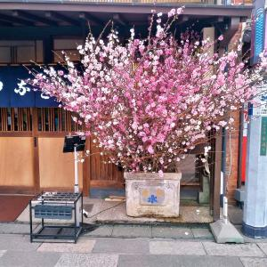 川越、大正浪漫夢通り、小川菊の防火用水は春だった