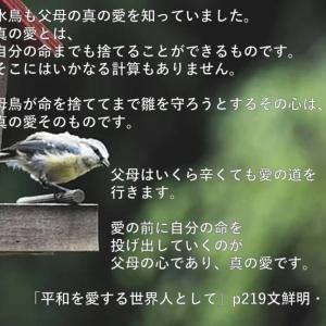 水鳥も父母の愛を知っていました。