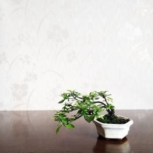 小さな盆栽の魅力