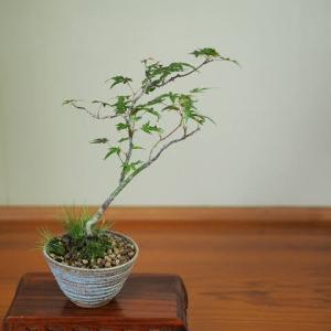 盆栽は想像の遊び