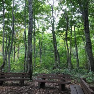 森林浴 森歩き 白い森