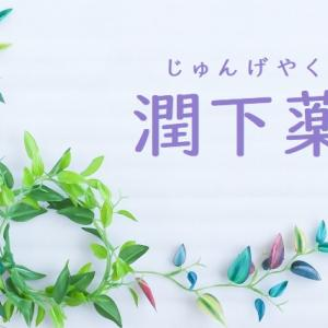 【潤下薬】~麻子仁・郁李仁・蜂蜜~