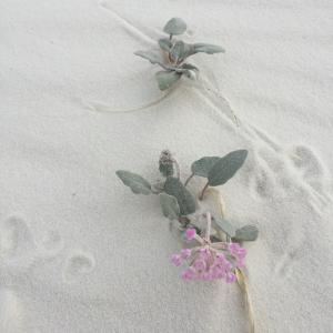 魅了! アートを生み出す砂丘 Visit@Whitesands②~ホワイトサンズ国定公園