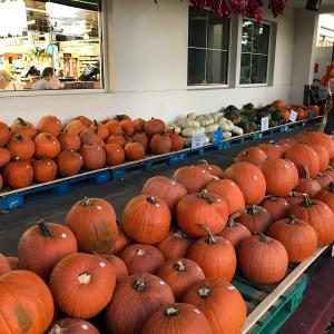 ハロウィン かぼちゃ画 アメリカ⑦ ~ Enjoy Halloween Season