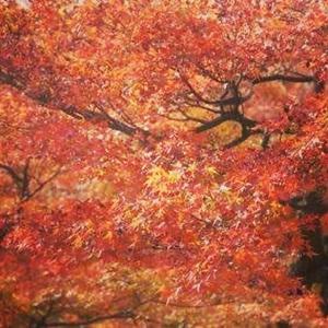 秋 ~Autumn