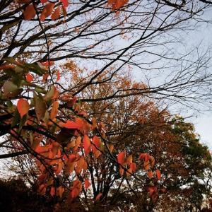 今日の1曲:襟裳岬  〜森進一さんの息子、ヒロさん