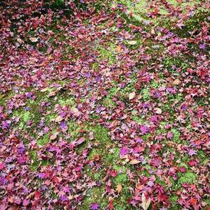 秋に魅了される 〜龍安寺1