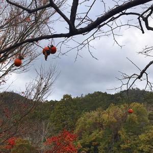 こんな風景も秋らしい 〜龍安寺3